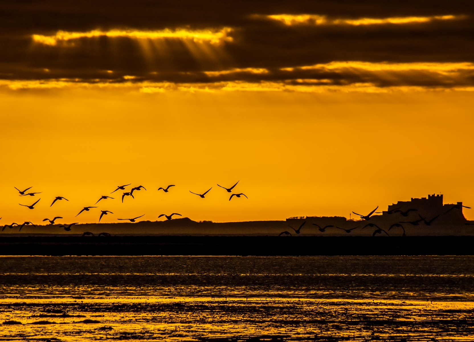 Geese in flight in front of Bamburgh Castle Northumberland, shot from Lindisfarne.