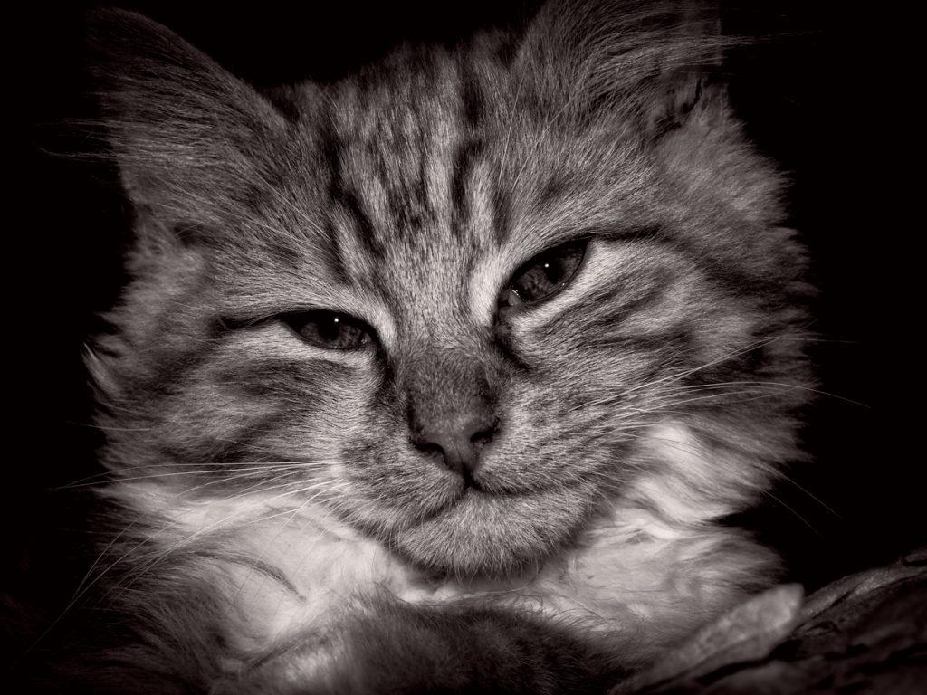 Photographic services - pets