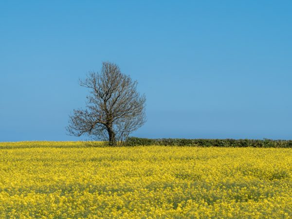 tree amongst yellow flowers and a blue sky: Bronze Basic Course
