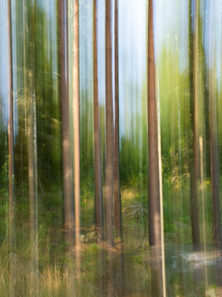 Deliberate camera movement of trees. Shot in Finland in 2010 with an old Olympus E-510 and a kit lens. Buying lenses to replace your existing ones may not be necessary.