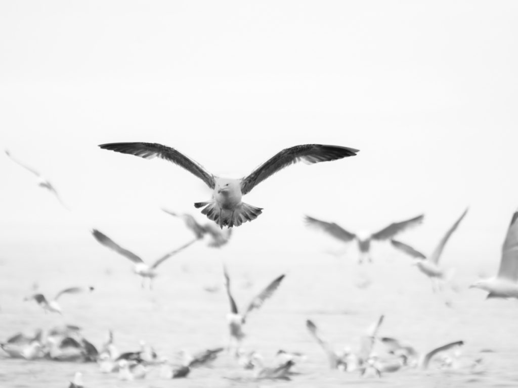 Gulls and other coastal birds flocking over the sea