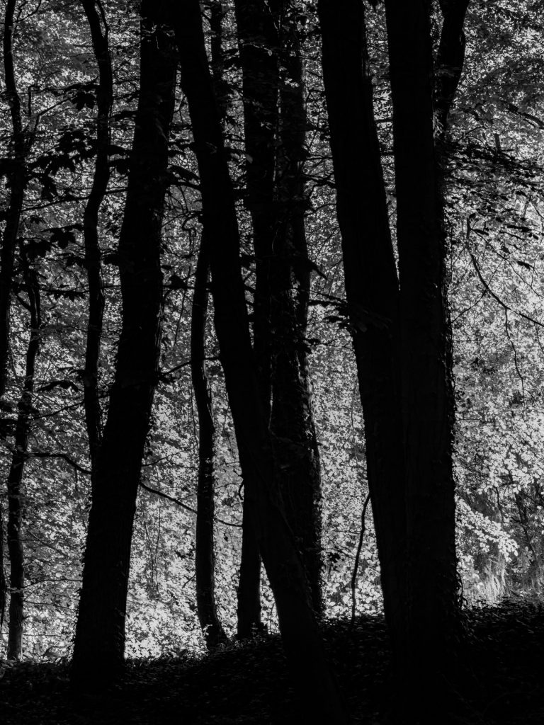 summer trees in black and white