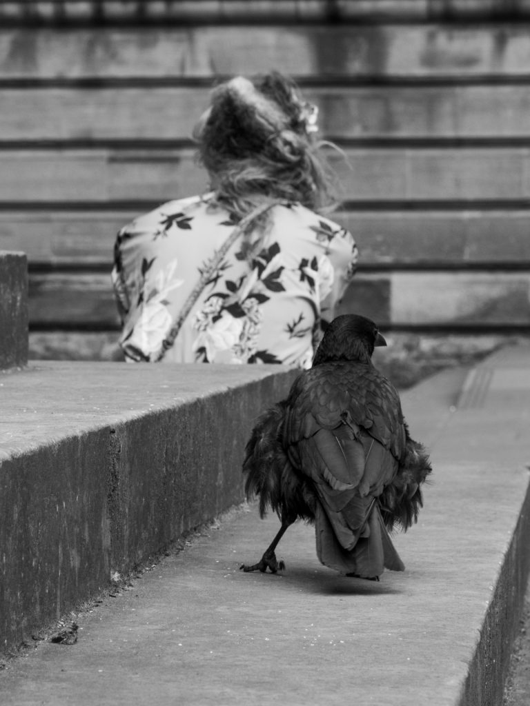 A crow stands behind a sitting woman who is unaware of it. An unconventional example of Street Art Photography