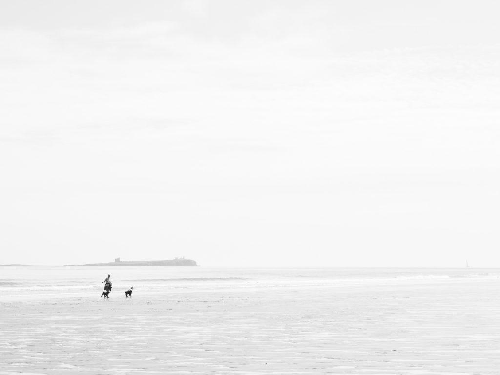 beach doq walker and Inner Farne