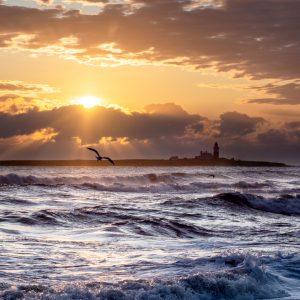 Gulls over the sea at sunrise