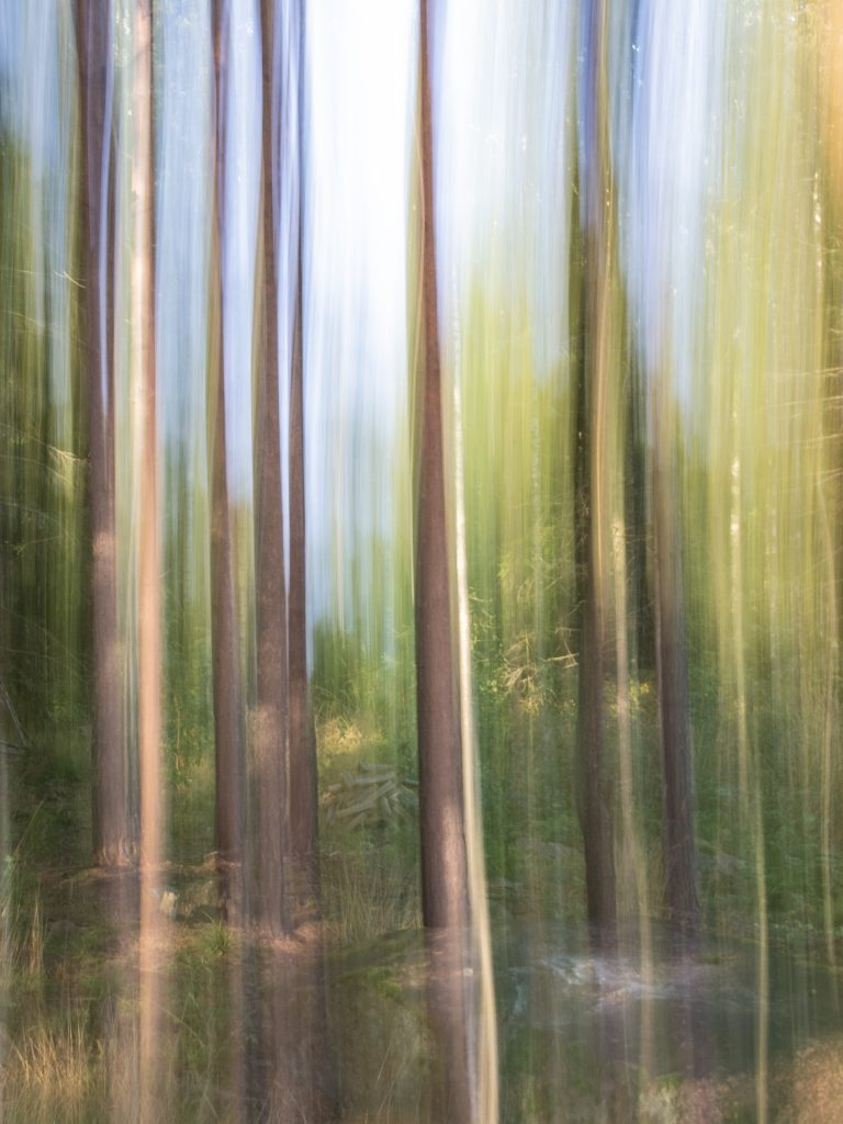 Fall: Partial deliberate camera movement captures the height of the trees and the features on the ground.