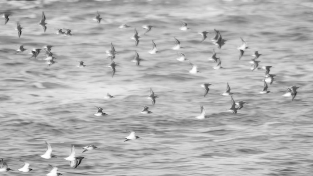 Fall: Waders over the ocean