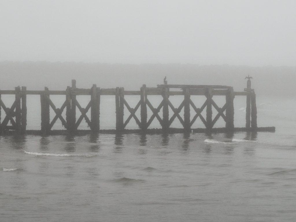 cormorant frying its wings in the fog