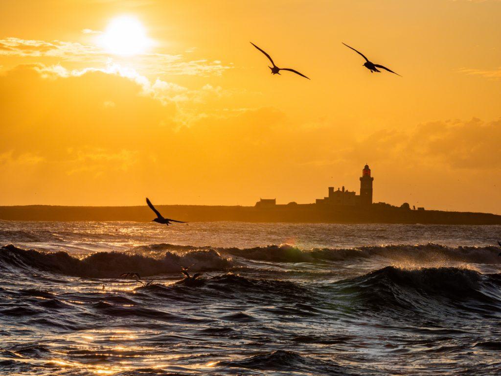 Gulls over the sea