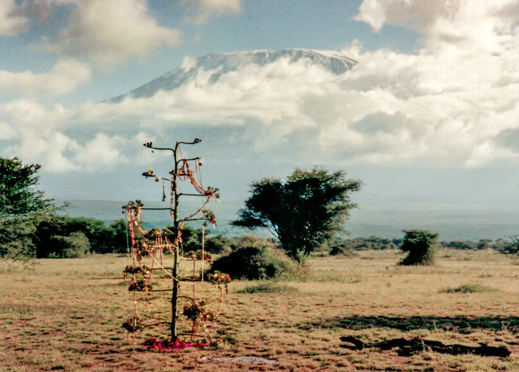 Christmas 'tree' made from a sisal flower, in Amboseli National park, with Kilimanjaro behind. Shot with an Olympus Mju II 35mm compact